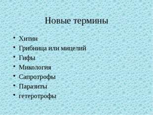 Новые термины Хитин Грибница или мицелий Гифы Микология Сапротрофы Паразиты г
