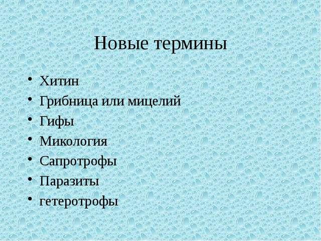 Новые термины Хитин Грибница или мицелий Гифы Микология Сапротрофы Паразиты г...