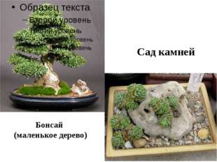 Бонсай (маленькое дерево) Сад камней