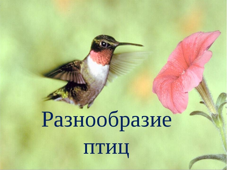 Разнообразие птиц