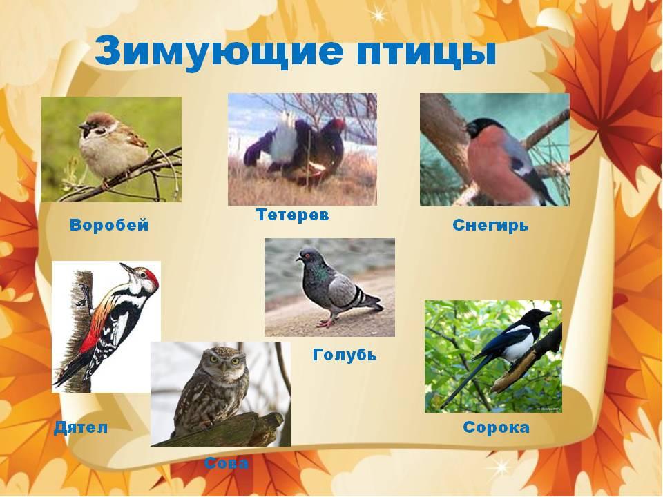 Птицы осенью презентация для дошкольников