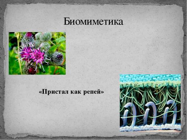 «Пристал как репей» Биомиметика