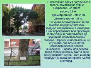 В настоящее время полувековой тополь-памятник на улице Некрасова, 22 имеет в