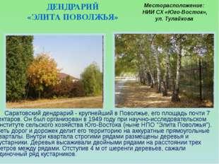 Саратовский дендрарий - крупнейший в Поволжье, его площадь почти 7 гектаров.