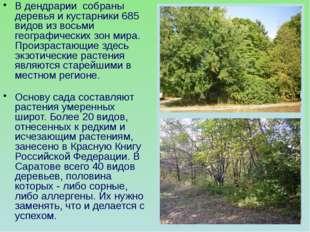 В дендрарии собраны деревья и кустарники 685 видов из восьми географических з