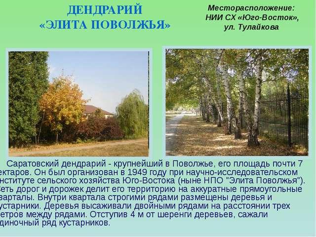 Саратовский дендрарий - крупнейший в Поволжье, его площадь почти 7 гектаров....