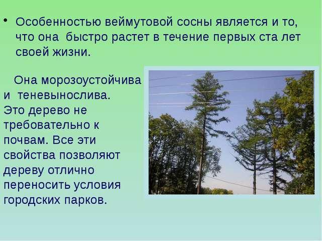 Она морозоустойчива и теневынослива. Это дерево не требовательно к почвам. В...
