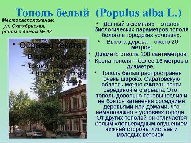 Данный экземпляр – эталон биологических параметров тополя белого в городских...