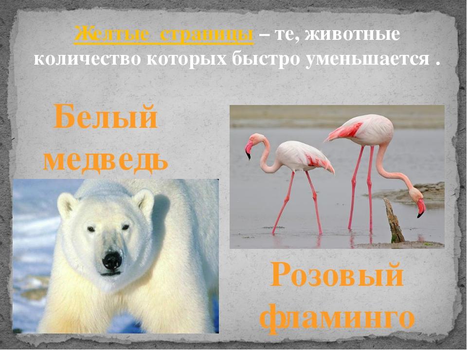 Желтые страницы– те, животные количество которых быстро уменьшается . Белый...