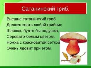 Сатанинский гриб. Внешне сатанинский гриб Должен знать любой грибник. Шляп