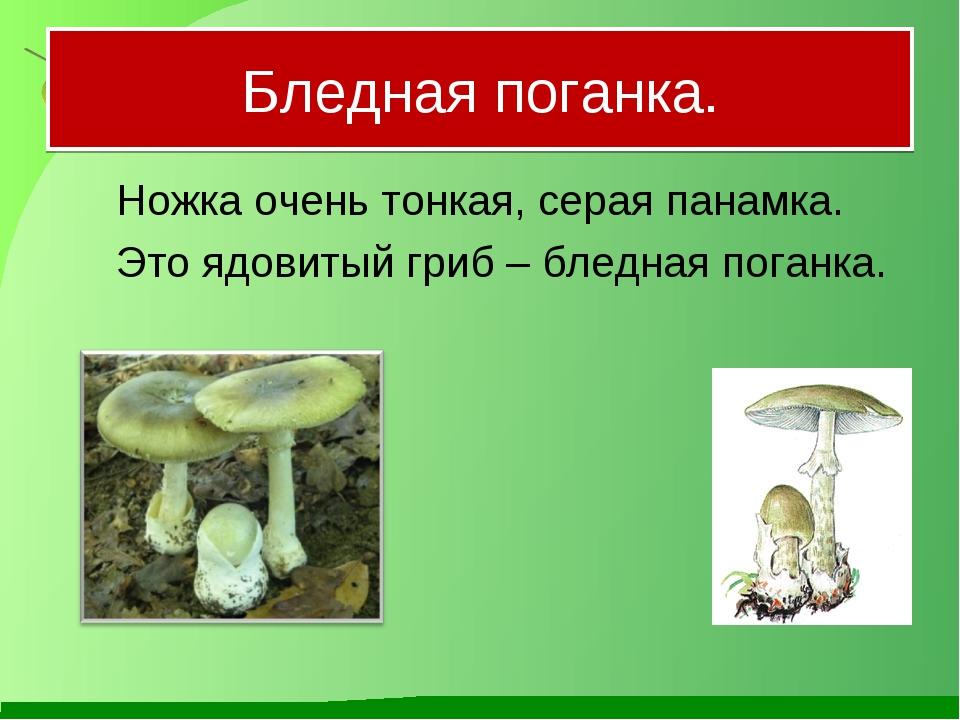 Бледная поганка. Ножка очень тонкая, серая панамка. Это ядовитый гриб – бле...