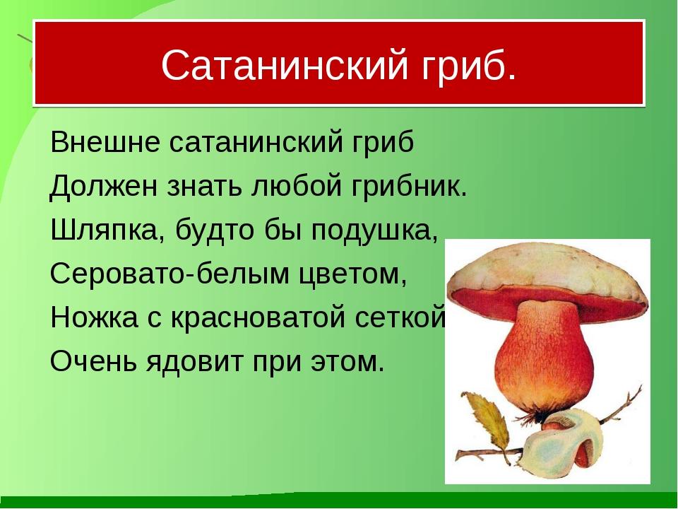 Сатанинский гриб. Внешне сатанинский гриб Должен знать любой грибник. Шляп...