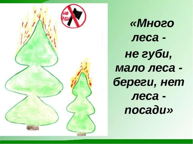 «Много леса - не губи, мало леса - береги, нет леса - посади»
