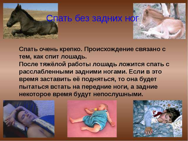 Спать очень крепко. Происхождение связано с тем, как спит лошадь. После тяжёл...