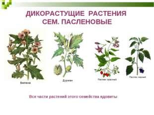 ДИКОРАСТУЩИЕ РАСТЕНИЯ СЕМ. ПАСЛЕНОВЫЕ Все части растений этого семейства ядов