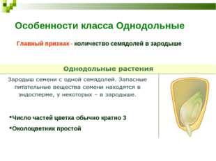 Особенности класса Однодольные Главный признак - количество семядолей в зарод
