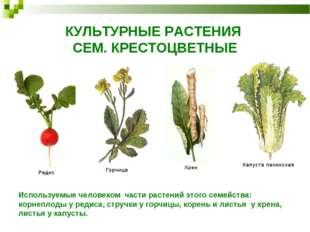 КУЛЬТУРНЫЕ РАСТЕНИЯ СЕМ. КРЕСТОЦВЕТНЫЕ Используемые человеком части растений