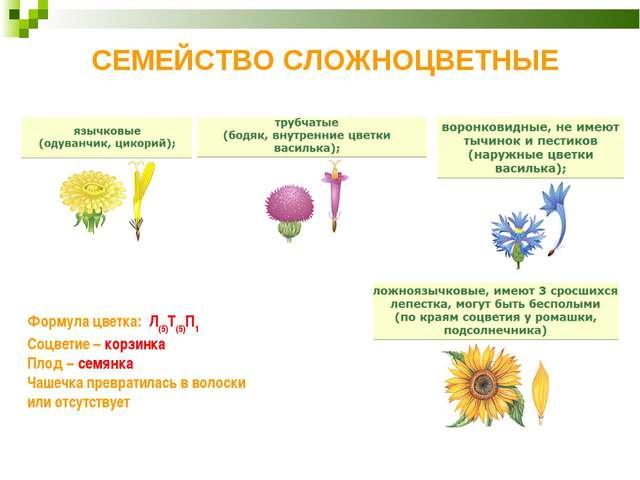 СЕМЕЙСТВО СЛОЖНОЦВЕТНЫЕ Формула цветка: Л(5)Т(5)П1 Соцветие– корзинка Плод–...