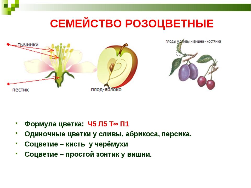Рисунки розоцветные