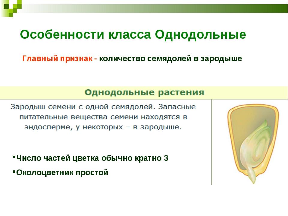 Особенности класса Однодольные Главный признак - количество семядолей в зарод...
