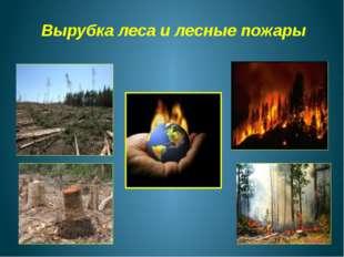 Вырубка леса и лесные пожары