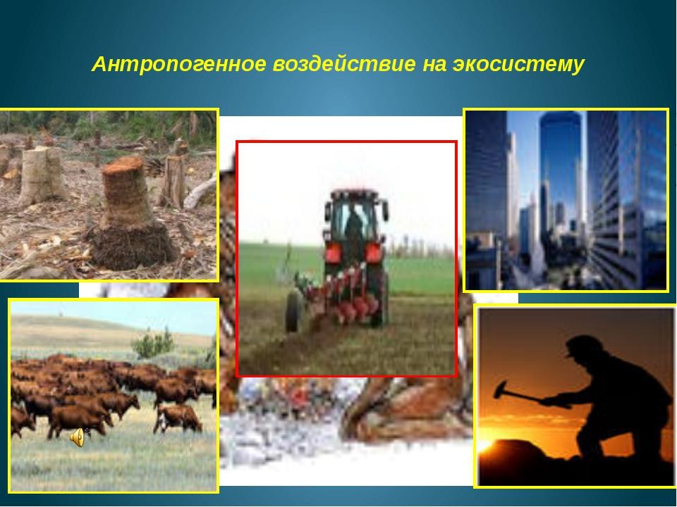 Антропогенное воздействие на экосистему