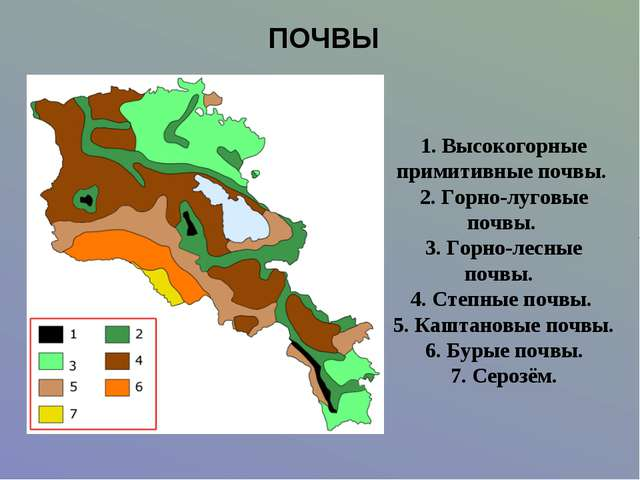 ПОЧВЫ 1. Высокогорные примитивные почвы. 2. Горно-луговые почвы. 3. Горно-лес...