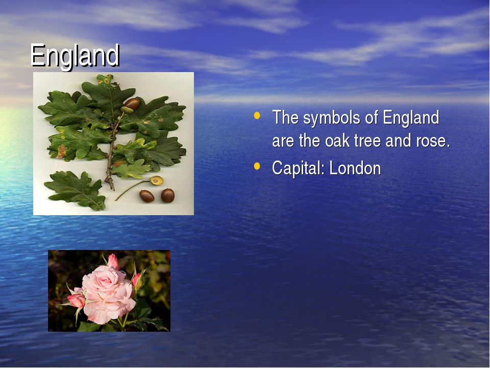 England The symbols of England are the oak tree and rose. Capital: London