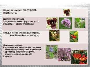 Объединяет около1300 видов, в РФ произрастают свыше 600 видов. Формула цветка