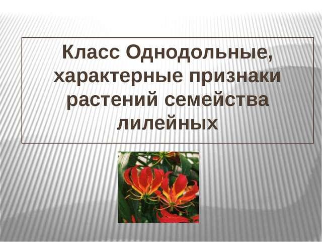 Класс Однодольные, характерные признаки растений семейства лилейных