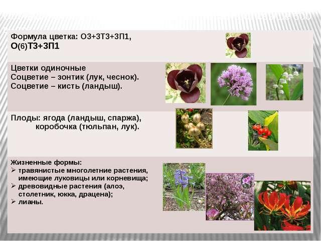 Объединяет около1300 видов, в РФ произрастают свыше 600 видов. Формула цветка...