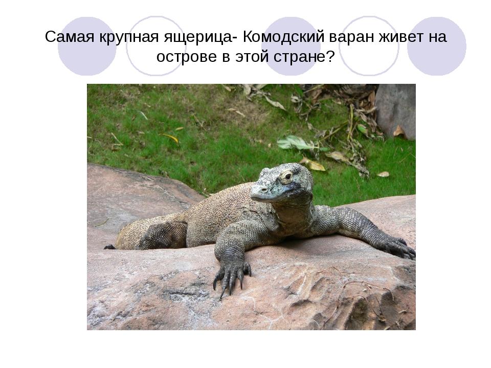 Самая крупная ящерица- Комодский варан живет на острове в этой стране?