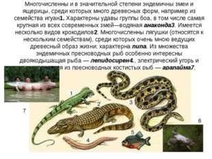 Многочисленны и в значительной степени эндемичны змеи и ящерицы, среди которы