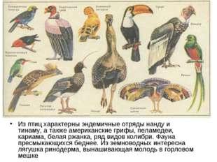 Из птиц характерны эндемичные отряды нанду и тинаму, а также американские гри