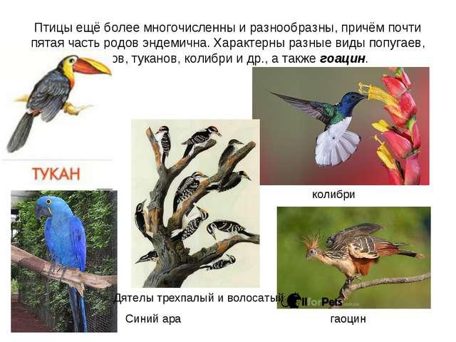 Птицы ещё более многочисленны и разнообразны, причём почти пятая часть родов...