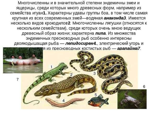 Многочисленны и в значительной степени эндемичны змеи и ящерицы, среди которы...