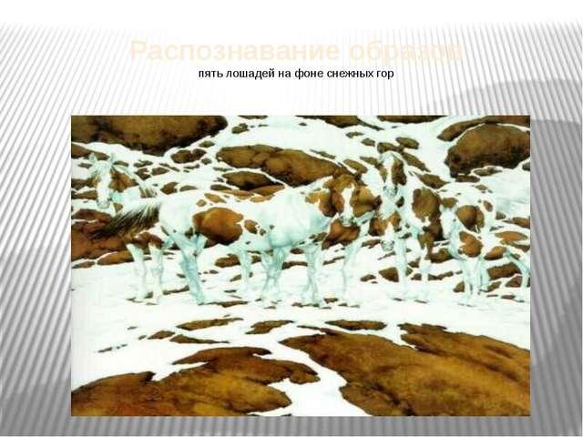 Распознавание образов пять лошадей на фоне снежных гор