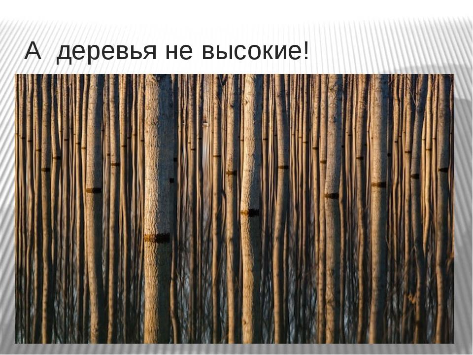 А деревья не высокие!
