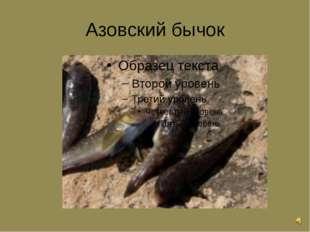 Азовский бычок