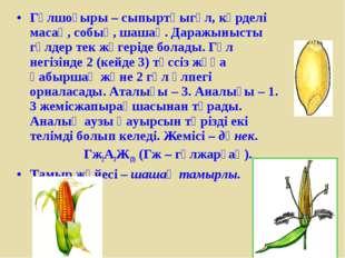 Гүлшоғыры – сыпыртқыгүл, күрделі масақ, собық, шашақ. Даражынысты гүлдер тек