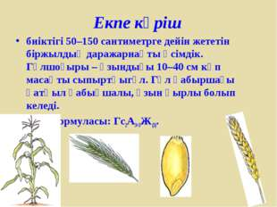 Екпе күріш биіктігі 50–150 сантиметрге дейін жететін біржылдық даражарнақты ө