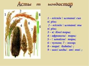 1 – егістік қылтанақсыз күріш; 2 – егістік қылтанақты күріш; 3 – кәдімгі тары