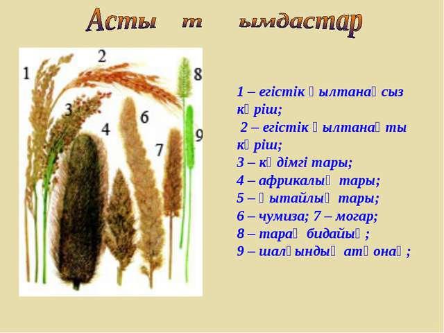 1 – егістік қылтанақсыз күріш; 2 – егістік қылтанақты күріш; 3 – кәдімгі тары...