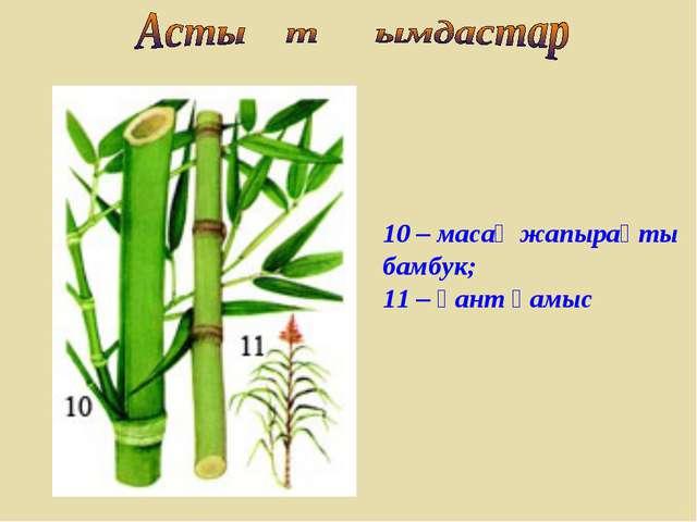 10 – масақ жапырақты бамбук; 11 – қант қамыс