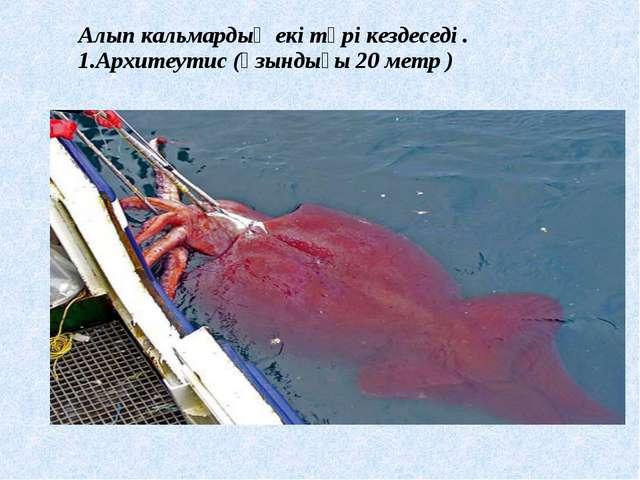 Алып кальмардың екі түрі кездеседі . 1.Архитеутис (ұзындығы 20 метр )