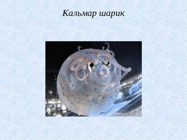 Кальмар шарик