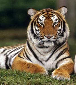 C:\Users\seven\Pictures\ОКР МИР\красивые животные\3VDOy2X-EbM.jpg