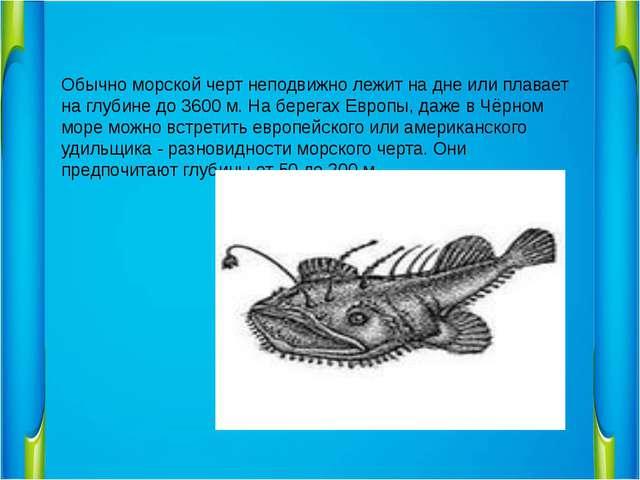 Обычно морской черт неподвижно лежит на дне или плавает на глубине до 3600 м...