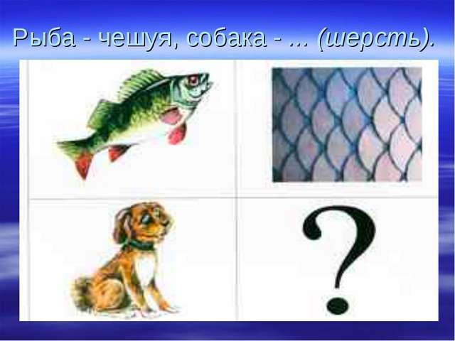 Рыба - чешуя, собака - ... (шерсть).