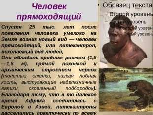 Спустя 25 тыс. лет после появления человека умелого на Земле возник новый вид